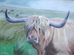 03 Highland Bull copy