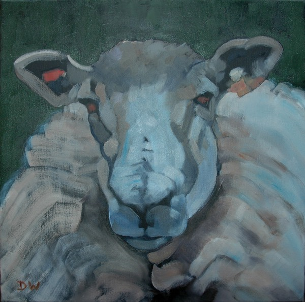 05 Ewe looking at me